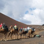 lanzarote camel ride at timanfaya national park