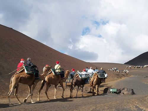 lanzarote camel ride at timanfaya national park