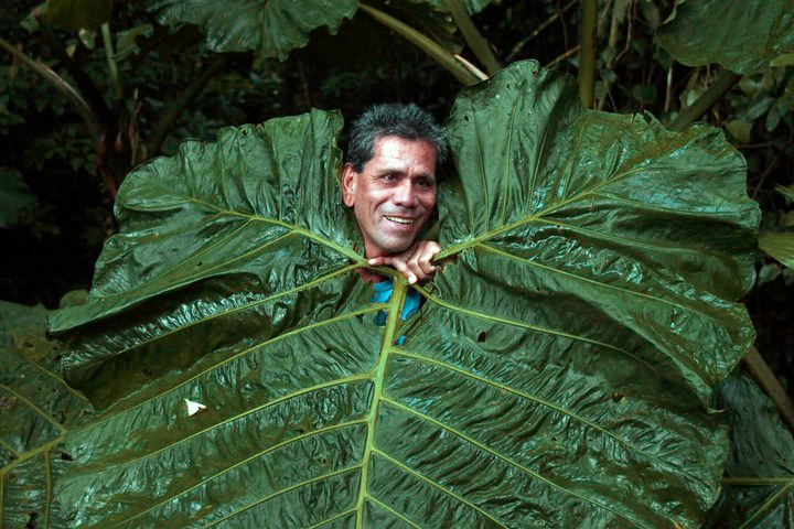 This is a photo of our travel guide with a leaf covering his body, leaving just enough room for his head to peer out from the rain forest of Costa Rica.
